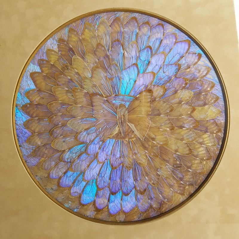 Cadre D 233 Cor Ailes De V 233 Ritables Papillons Bleus Morpho